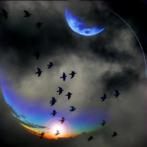 https://maessage.wordpress.com — oiseaux noirs volant dans un ciel vivement coloré et aux nuages sombres • photographie de Carlos WEICK, photographe brésilien : « Reedição night & day » / « Réédition nuit & jour »